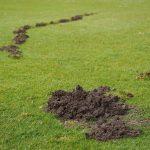 worst golf courses